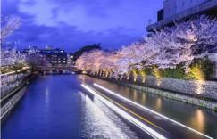 日语口语交流网站哪个好?怎样选择好的日语口语交流网站?